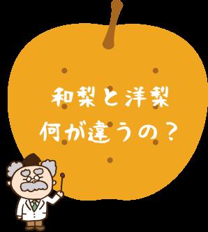 和梨と洋梨何が違うの?
